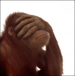 shame-monkey